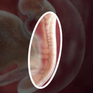 pregnancy-week-5-amniotic-sac_square-zoom-3