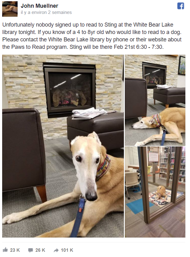 The 100 000 times shared Facebook post, displaying the sad greyhound waiting for children
