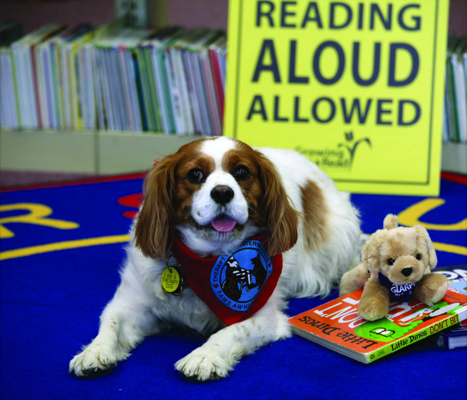 Therapy dog in library ready to hear a children