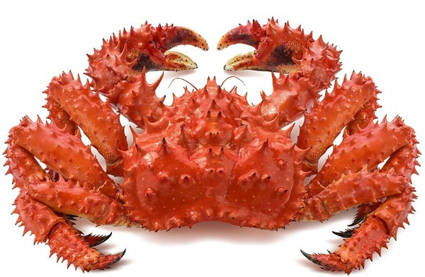 can pregnant women eat crab  watch how to cook crabs
