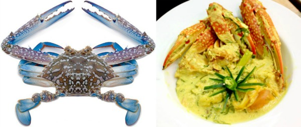(Left) This is a Flower Crab. Harvested from the Indian and Pacific Oceans, as well as the Mediterranean Sea, this specie of crab is widely available in most if not all of our supermarkets. (Image Credit) theoceanmart.com (Right) This is Ketam Masak Lemak, cooked using coconut milk, turmeric leaves, tamarind, lemongrass and of course ─ the flower crab. (Image Credit) danielfooddiary.com