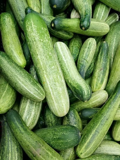 A large number of cucumbers. Too cooling. Fruits and Vegetables in Malaysia