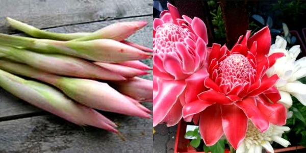 Bunga Kantan bud and full bloom.Peel Shallots, Onions, Ginger, Turmeric faster than you can say Save Time In The Kitchen