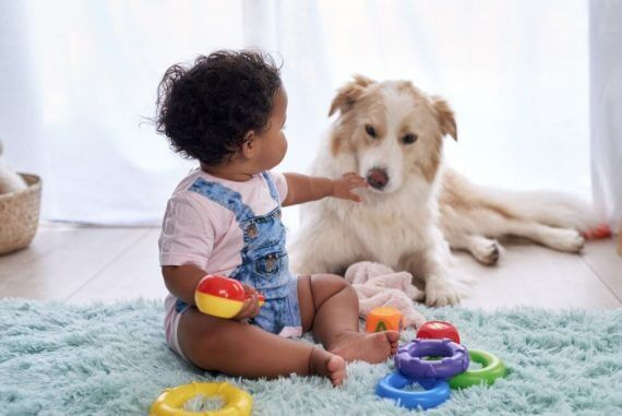 toddler play with dog