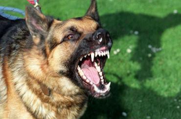 bayi diserang anjing
